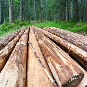 Wood Used for Furniture | The Stated Home