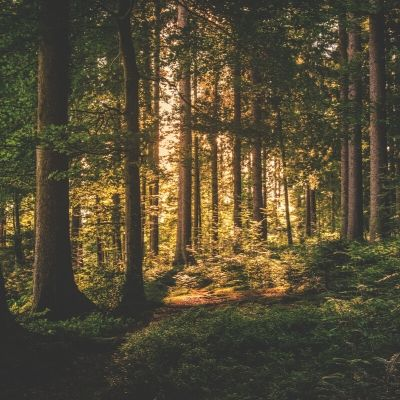 Eco-Friendly Furniture: The Truth About Logging